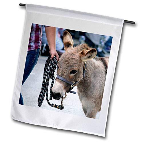 3dRose Susans Zoo Crew Animal - Miniature Donkey Head Halter Animal - 12 x 18 inch Garden Flag (fl_294155_1)
