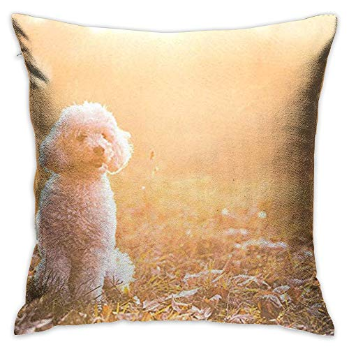 Throw Pillow Cover Poodle Dog with Sun Decorative Pillow Case Decor Square 18x18 Inch Cushion Pillowcase ()