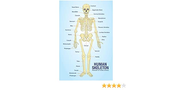 amazon human skeleton anatomy anatomical chart poster print 13 Diagram of Human Feet amazon human skeleton anatomy anatomical chart poster print 13 x 19in color human skeletons posters prints