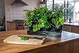 Watex Countertop Garden Kit (Black)