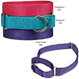 Guardian Gear Nylon Martingale Dog Collar, 10 to 16-Inch, Ultra Violet