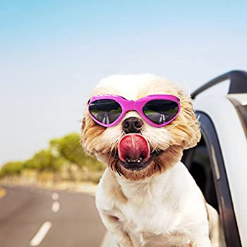Amazon.com : Petleso Pet Goggles Stylish Dog Sunglasses