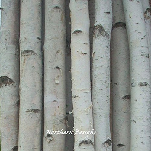 Six Medium White Birch Poles 8 ft by Northern Boughs