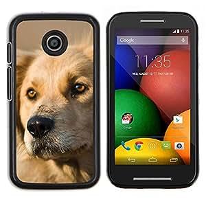 Perro del labrador retriever de oro canina mascotas- Metal de aluminio y de plástico duro Caja del teléfono - Negro - Motorola Moto E / XT1021 / XT1022