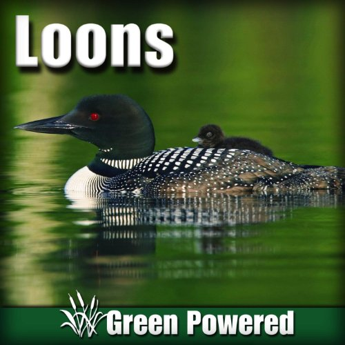 Loons (Nature Sound)