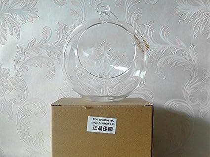 Amazon Com Newdreamworld S Extra Large Terrarium 8 Glass Globe