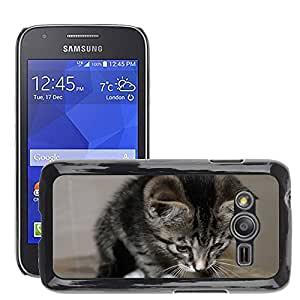 Etui Housse Coque de Protection Cover Rigide pour // M00116034 Gato Animal Pet Adidas Caballa // Samsung Galaxy Ace4 / Galaxy Ace 4 LTE / SM-G313F