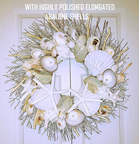 "21"" Sea Shell Wreath on Birch Twig with Highly Polished Abalone Shells"