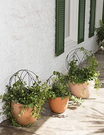 Amazon.com: Sphere Topiary Frame, Small: Home & Kitchen