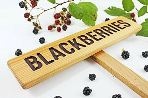 - BLACKBERRIES Garden Sign, Summer Berries, Hand Routed Plant Marker, Oregon Summer Fruit, Custom Garden Sign, Personalized Garden Marker