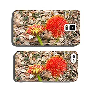 red sphere flower(fireball lily)in Victoria Falls cell phone cover case iPhone5
