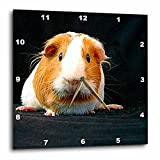 Cheap 3dRose dpp_1062_2 Guinea Pig Wall Clock, 13 by 13-Inch
