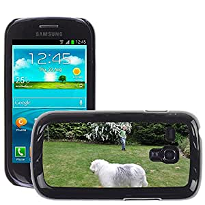 Hot Style Cell Phone PC Hard Case Cover // M00116728 Dog Ball Young Dog Bobtail Child // Samsung Galaxy S3 MINI i8190