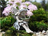 Fairy Garden Tammy Review