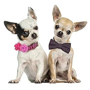 Bow & Arrow Pet Dog Collar Accessories, Four Dog Collar Flowers, Slide On Attachment, Multicolor