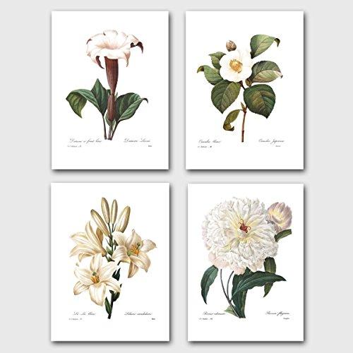 set-of-4-botanical-prints-redoute-art-white-flower-room-decor-lily-camellia-peony-unframed