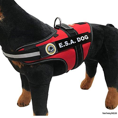 Knqls Dql on Industrial Service Dog Puppy Vest