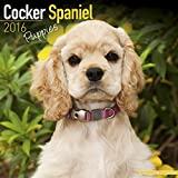 Cocker Spaniel Puppies Calendar - Only Dog Breed Cocker Spaniel Puppies Calendar - 2016 Wall calendars - Dog Calendars - Monthly Wall Calendar by Avonside