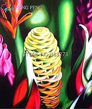 Green Seeds Co. 100 unids orgánica colmena plantas de jengibre muy sabrosas nutritive brisly flor bonsai jardinería diy: blanco