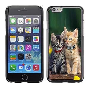 Qstar Arte & diseño plástico duro Fundas Cover Cubre Hard Case Cover para Apple iPhone 6(4.7 inches) ( Cute Baby Kitten Cat Green Furry Pet)