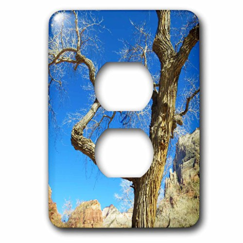 Jos Fauxtographee- Barren Tree - A tree with no leaves in the winter in Zion at the Grotto Trail - Light Switch Covers - 2 plug outlet cover - Zion Outlets At