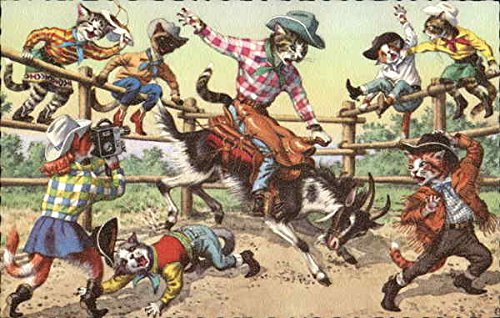 Cats in a Rodeo Dressed Animals Original Vintage Postcard from CardCow Vintage Postcards