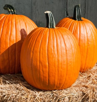 David's Garden Seeds Pumpkin Cargo PMR D3978POI (Orange) 25 Hybrid Seeds