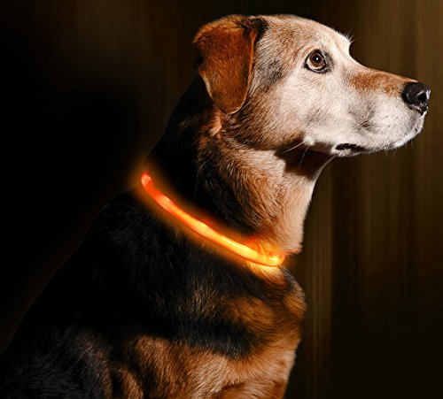 (Illumiseen LED Dog Necklace Collar - USB Rechargeable Loop - Available in 6 Colors - Makes Your Dog Visible, Safe &)