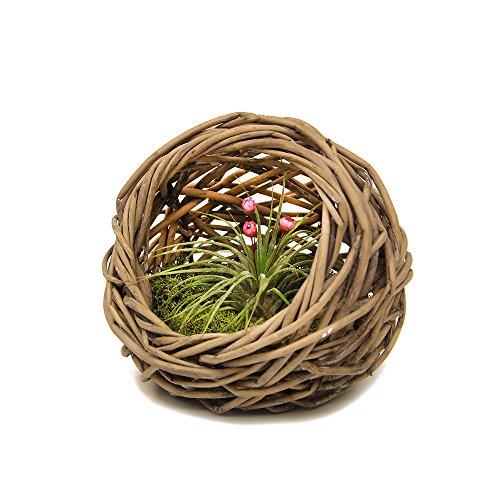 livetrends-woven-basket-living-air-plant-decoration