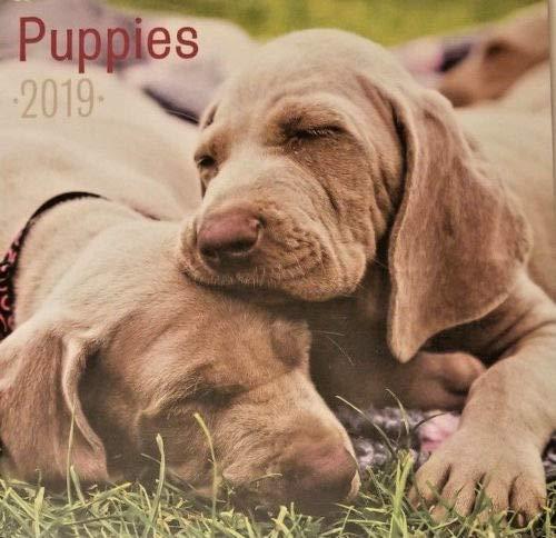 - Puppies 16 Month 2019 Wall Calendar 12