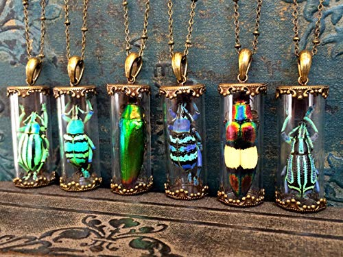 Real beetle necklace for women Glass terrarium jewelry Insect taxidermy weevil jewel beetle pendant Scarab amulet