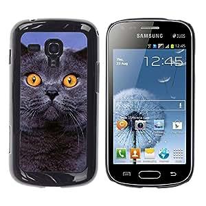 TopCaseStore / la caja del caucho duro de la cubierta de protección de la piel - Siberian Blue British Shorthair Cat - Samsung Galaxy S Duos S7562