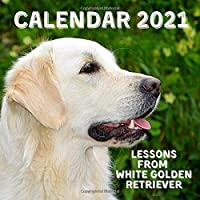 Lessons From White Golden Retriever Calendar 2021: November 2020 - December 2021 Square Photo Book Monthly Planner…