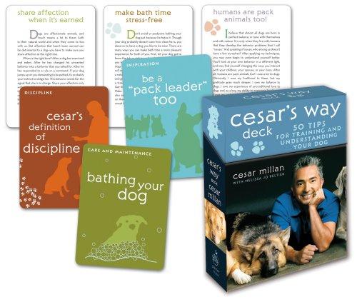 cesars way dog training pdf