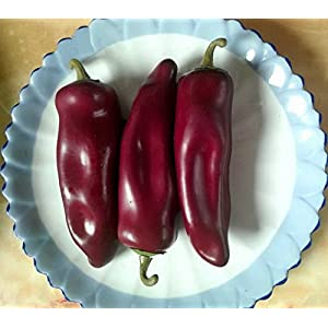 Gresorth 10pcs Artificial Lifelike Chili Fake Pepper Vegetable Decoration Home Kitchen Food Toy Photography Props 2