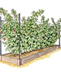 Raised Garden Bed, Raspberry Bed Kit Review