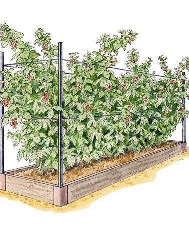 Raised Garden Bed, Raspberry Bed Kit