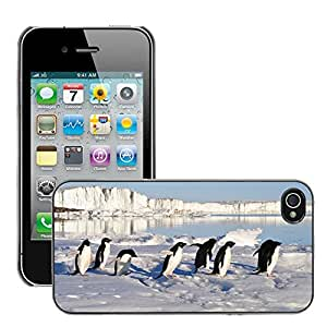 Hot Style Cell Phone PC Hard Case Cover // M00111113 Penguins Birds Arctic Water // Apple iPhone 4 4S 4G