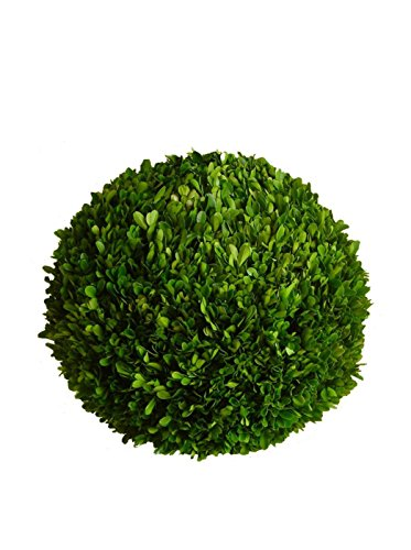 """Mills Floral Preserved Boxwood Ball 10"""""""