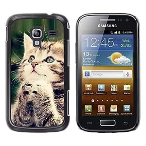 Praying Kitten American Longhair Wirehair - Metal de aluminio y de plástico duro Caja del teléfono - Negro - Samsung Galaxy Ace 2 I8160 Ace II X S7560M