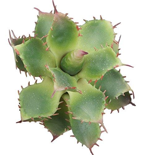 Duovlo Pack of 2 Artificial Succulent Plant 5.15 Inch Faux Succulents Agave potatorum Flower Arrangement Craft Wall DIY Materials (Green)