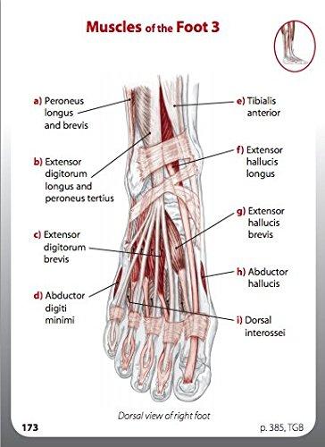 Amazon. Com: trail guide to the body flash card set v1 bones.