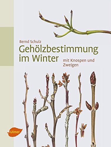 Gehölzbestimmung im Winter: mit Knospen und Zweigen