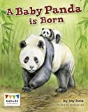 A Baby Panda Is Born (Engage Literacy: Engage Literacy White)