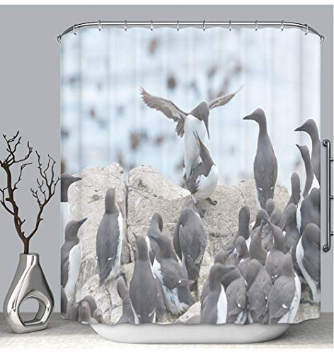 BEICICI Color Shower Curtain Liner Anti-Mildew Antibacterial Guillemots mating in Colony Custom Shower Curtain Bathtub Bathroom Accessories 54W×78Linch