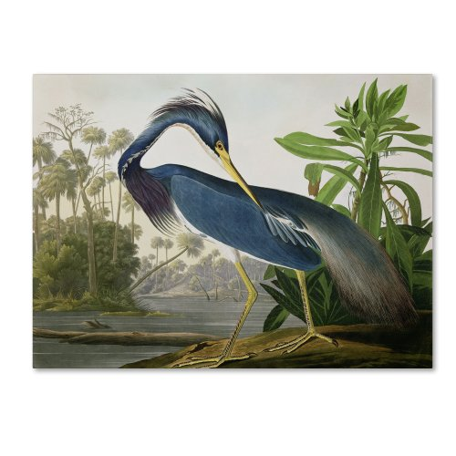 Louisiana Heron Artwork by John James Audubon, 35 by 47-Inch Canvas Wall Art