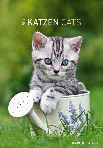 Katzen Bildkalender 2014