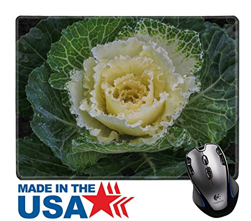 "Price comparison product image MSD Natural Rubber Mouse Pad/Mat with Stitched Edges 9.8"" x 7.9"" Ornamental cut kale in the garden IMAGE 24877647"