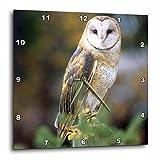 Cheap 3dRose dpp_84070_1 Barn Owl on a Fence Post NA02 JAL0000 John Alves Wall Clock, 10 by 10-Inch