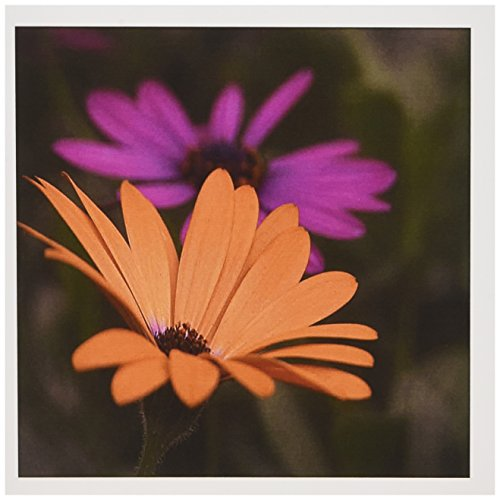 Gerber Daisy Personalized - 3dRose Pink and Orange Gerber Daisies - Greeting Cards, 6 x 6 inches, set of 6 (gc_17514_1)